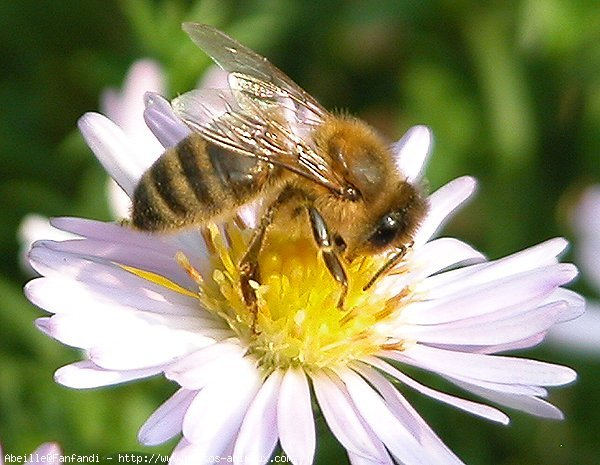 Honey Bee Facts – West Wind Farm